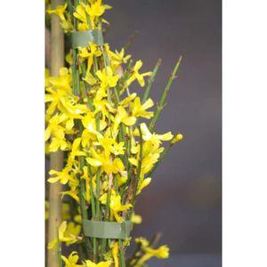 Jasmin Dhiver Nudiflorum C 2 Litres Fleur Jaune Achat Vente
