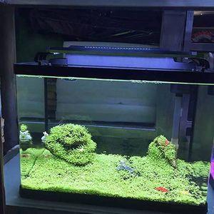 GRAINES Fish Tank Aquarium Plant Graines Aquatique Vert Fe