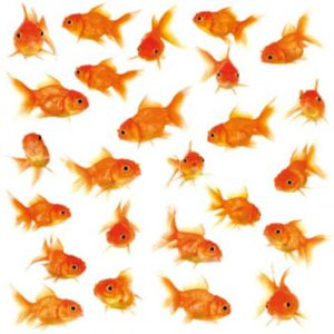 Stickers poisson rouge achat vente pas cher for Achat poisson rouge nice
