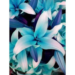BULBE 50Pcs Graines de fleur de lis lys bleu jardin plan