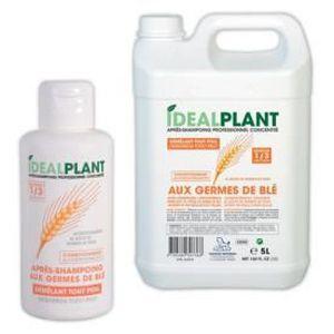 SHAMPOING - MASQUE Germe De Blé Shampooing Idéal Usine 200 ML