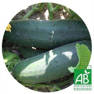 GRAINE - SEMENCE Concombre long anglais AB • Graine bio potagère •