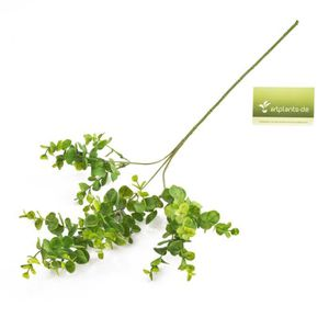 Branches decorative pour vase achat vente pas cher - Branche d eucalyptus ...
