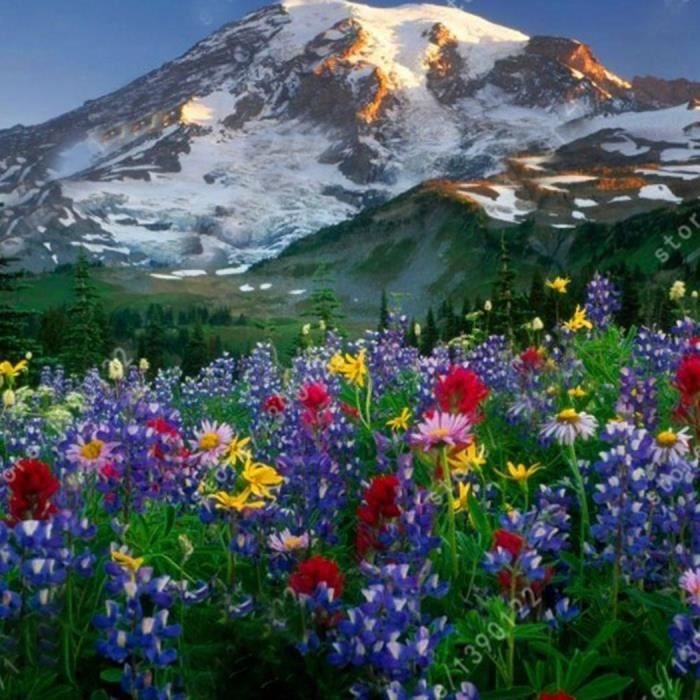Graines de Lupin Fleurs Vivaces Jardin Bonsaï plante 50 pcs - Achat ...