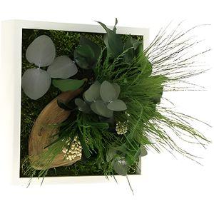tableau vegetal stabilise achat vente tableau vegetal. Black Bedroom Furniture Sets. Home Design Ideas