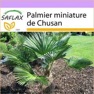 ARBRE - BUISSON SAFLAX - Palmier miniature de Chusan - 4 graines