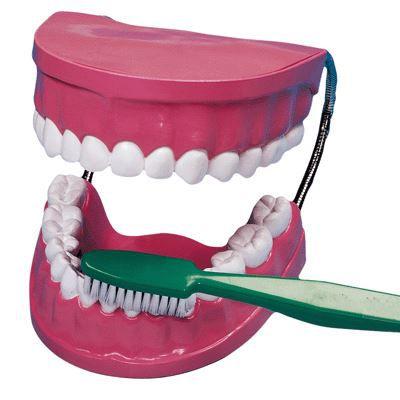 la bouche les dents brosse a dent geante achat vente brosse pour peindre la bouche les. Black Bedroom Furniture Sets. Home Design Ideas