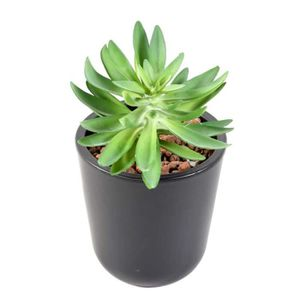 plante artificielle succulente achat vente pas cher. Black Bedroom Furniture Sets. Home Design Ideas