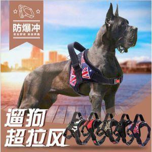 HARNAIS SPORT DE CHIEN Kingwing®Produits pour animaux de compagnie pour l