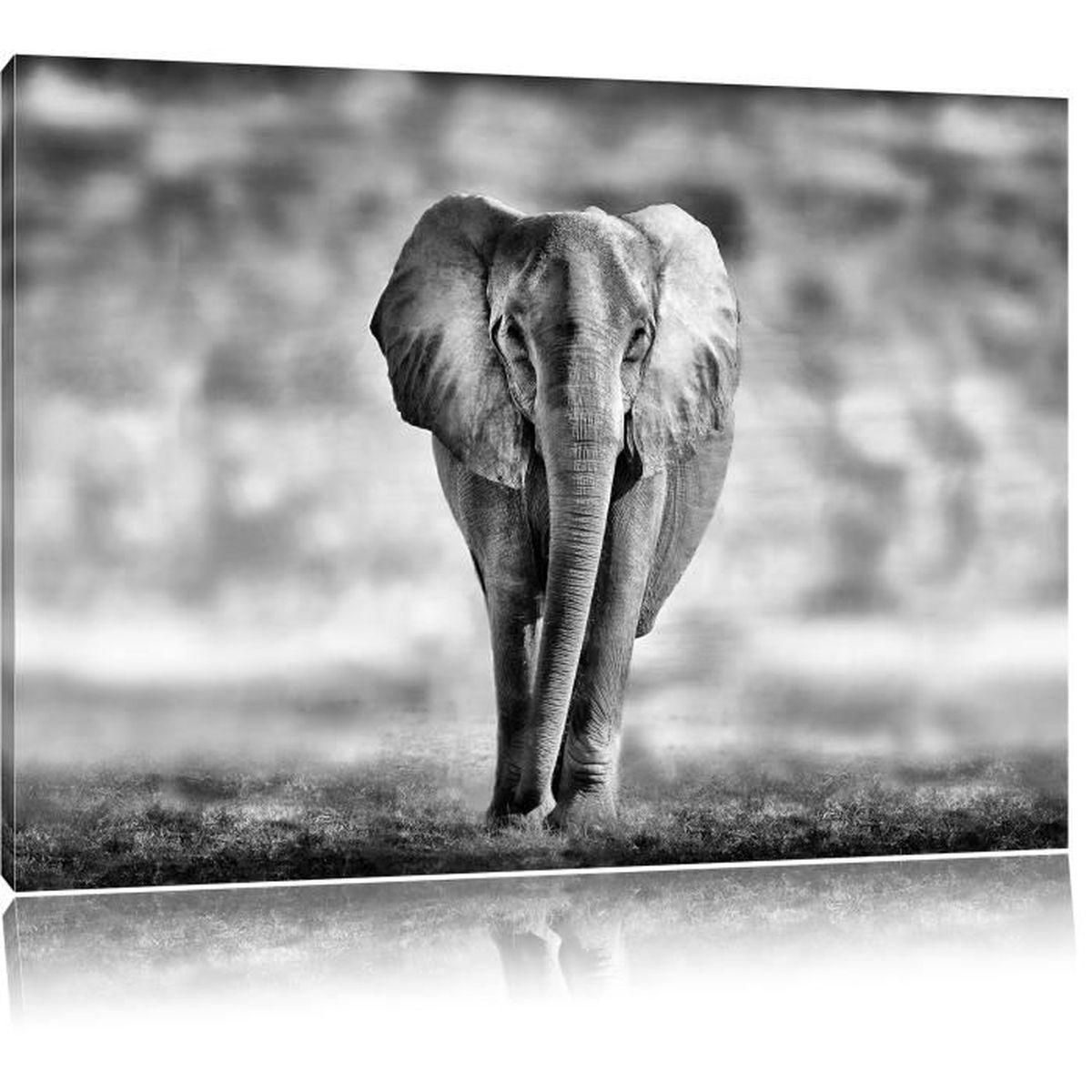 monocrome lone elephant noir blanc taille 80x60 sur toile xxl normes photos compl tement. Black Bedroom Furniture Sets. Home Design Ideas