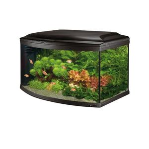 AQUARIUM CAYMAN 80 scenic Aquarium en verre noir 81,5x46x52