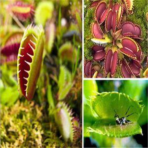 plante carnivore pas cher