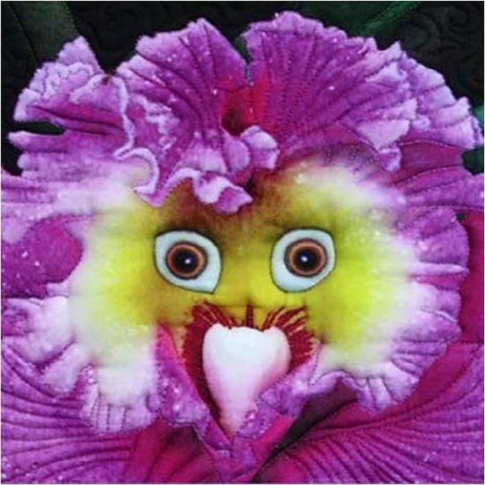 100pcs Graines De Visage De Bebe Orchidee Vivace Fleur Jardin