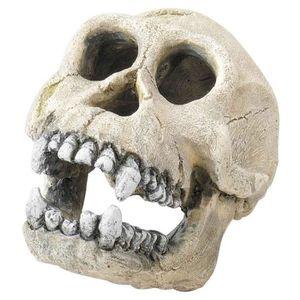 DÉCO VÉGÉTALE - RACINE Décoration Skull-L Aqua Della pour Terrarium