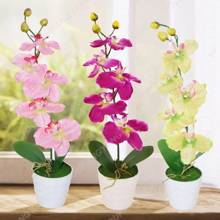 Version Rouge - 100 Pièces-Sac Rare Mini Orchidée Bonsaï Phalaenopsis  Intérieur Fleur Bonsais Pot Maison Jardin Plantas Décoration