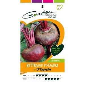 GRAINE - SEMENCE GONDIAN - Graines Légumes : Semences Betterave Pot