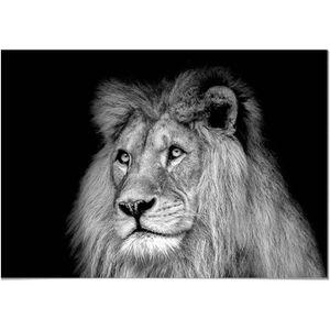 TABLEAU - TOILE Panorama® Tableau Lion Noir et Blanc 70x50cm - Imp
