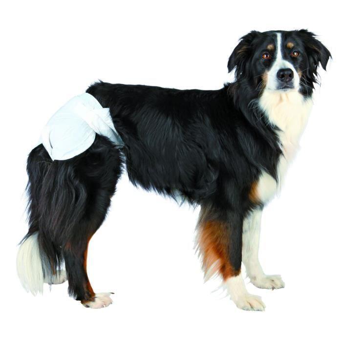 couche pour chien femelle regle