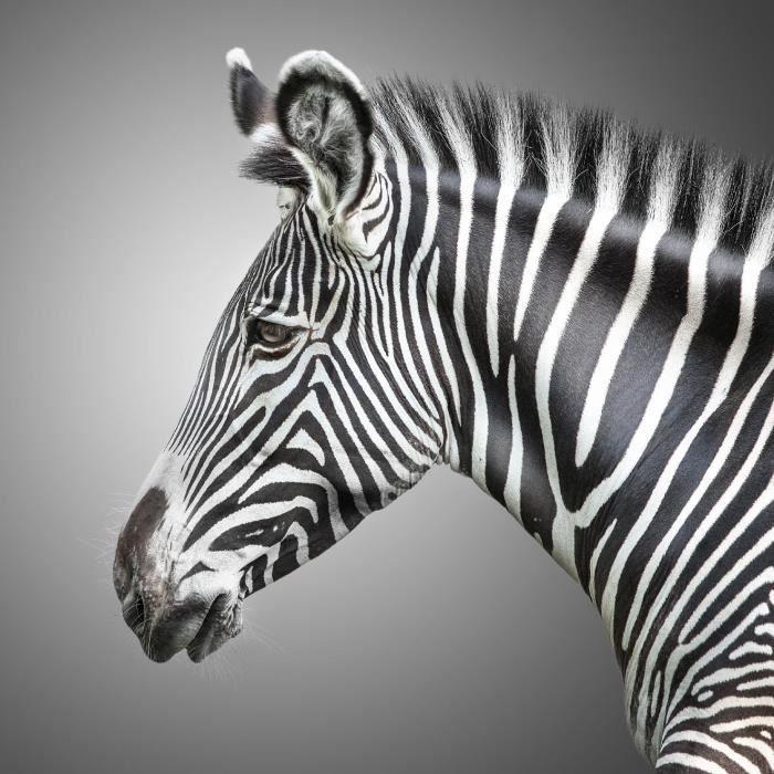 Deco zebre - Achat / Vente Deco zebre pas cher - Soldes* dès le 10 ...
