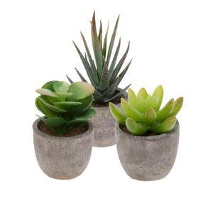plantes composition florale achat vente plantes composition florale pas cher cdiscount. Black Bedroom Furniture Sets. Home Design Ideas