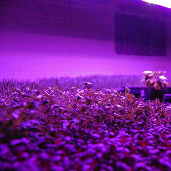 Spectre Led Croissance Leds Complet Lampe Horticole 1200w 6w xBoCredW