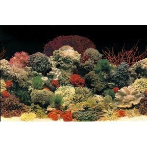 DÉCO ARTIFICIELLE Poster pour aquariums (Taille: M