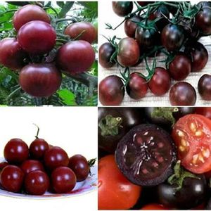 cecc3828a14e1 GRAINE - SEMENCE tomate Graines de légumes plantes de jardin Bonsaï ...