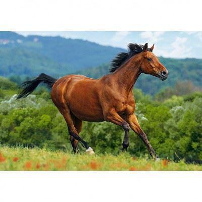puzzle 1000 pi ces cheval roux brun achat vente puzzle cdiscount. Black Bedroom Furniture Sets. Home Design Ideas