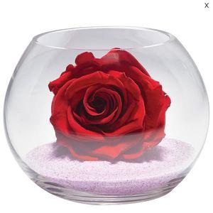 rose eternelle - achat / vente rose eternelle pas cher - cdiscount