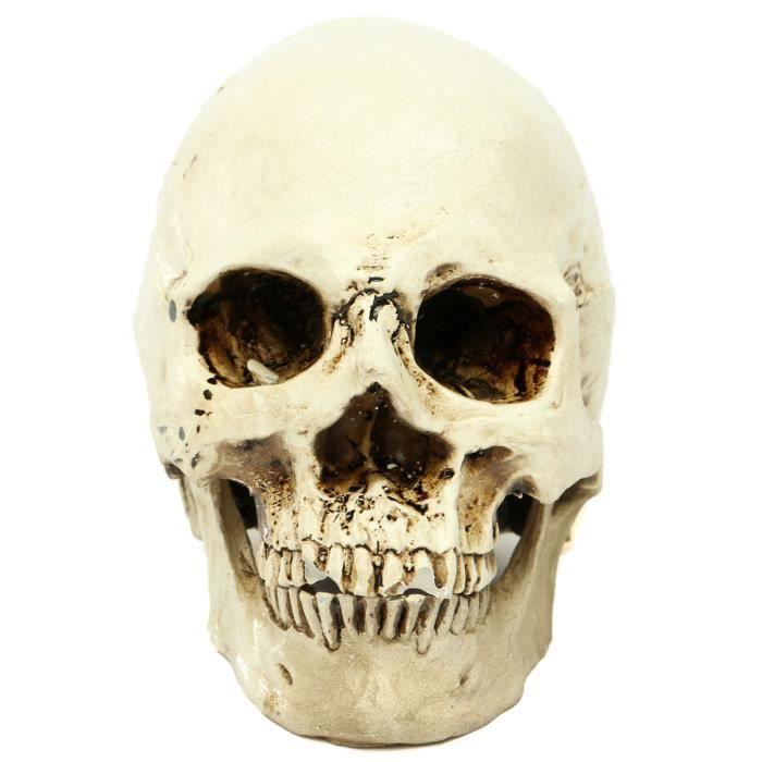 OBJET DÉCORATIF TEMPSA Halloween Crâne Humain Tête De Mort Squelet