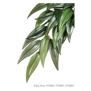 DÉCO VÉGÉTALE - RACINE EXO TERRA Plante Ruscus - Vert - Pour terrarium