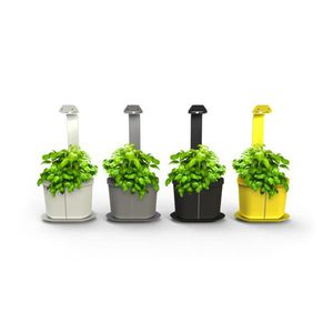 plante d 39 int rieur achat vente plante d 39 int rieur pas. Black Bedroom Furniture Sets. Home Design Ideas