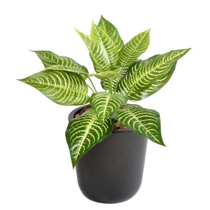 plante verte cdiscount