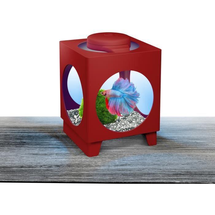 Poisson combattant achat vente pas cher for Aquarium pour poisson rouge pas cher