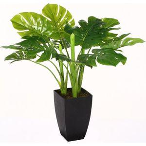 plante verte achat vente plante verte pas cher cdiscount. Black Bedroom Furniture Sets. Home Design Ideas
