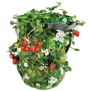 plants de fraises achat vente plants de fraises pas cher soldes d s le 10 janvier cdiscount. Black Bedroom Furniture Sets. Home Design Ideas