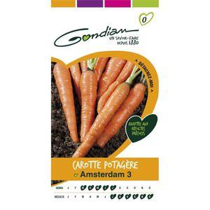 GRAINE - SEMENCE Gondian carotte potagère Amsterdam 3