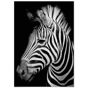 Tableau zebre nature coloré 6 panorama r tableau zebre 70x100cm imprimee sur