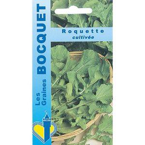GRAINE - SEMENCE Graines - Roquette cultivée