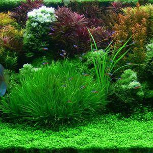ENTRETIEN OUTIL JARDIN 1000X Aquarium Fish Tank Mélange d'herbe Semences