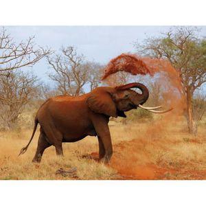 RIDEAU DE DOUCHE Poster Papier Peint Eléphants - Éléphant Africain