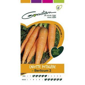 GRAINE - SEMENCE Gondian carottes potagère Berlicum 2