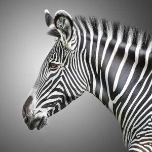 Deco zebre pas cher for Idee deco zebre