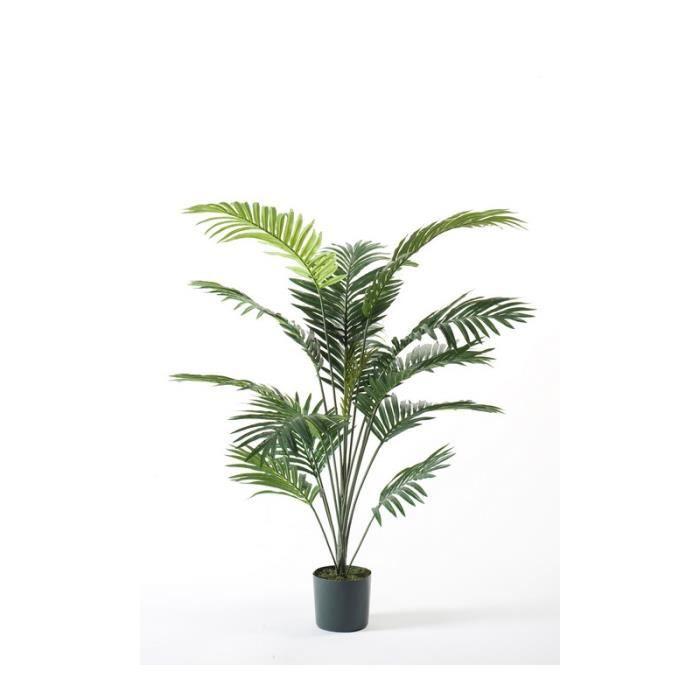 palmier kentia feuilles marron