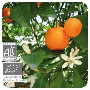 HUILE ESSENTIELLE PRANAROM Huile essentielle Mandarinier BIO - 10 ml
