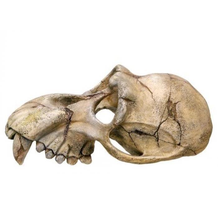 Nobby 28253 Décoration D'aquarium Représentant Un Crâne De Singe 22,5 X 14,5 11 Cm