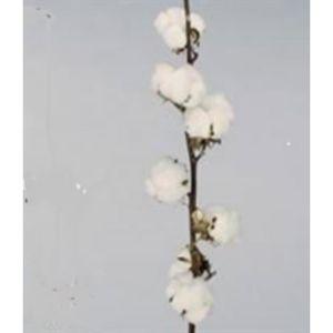 Fleur De Coton Achat Vente Pas Cher