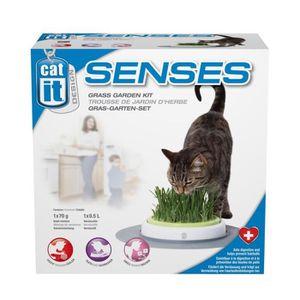 Jardin herbe ? chat