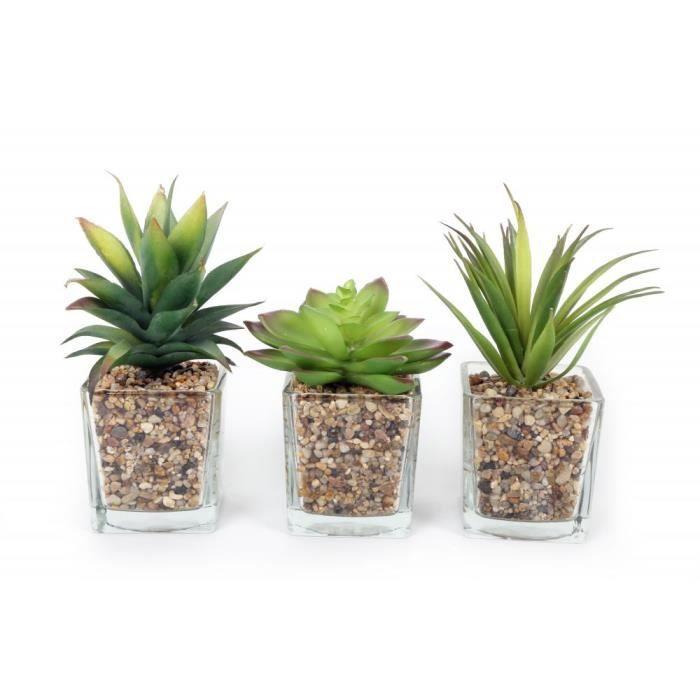 plante grasse wifi