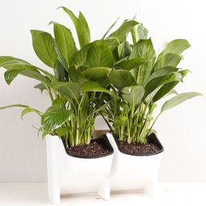 Mur vegetal interieur - Achat / Vente pas cher